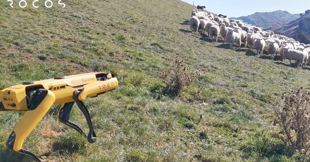 """A robot sheepdog? """"no one wants this,"""" says one shepherd"""